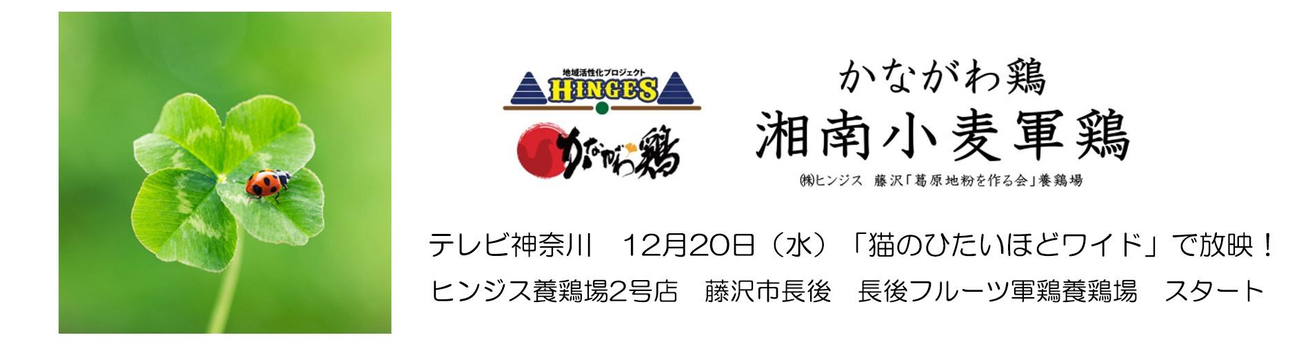 日本版DMOからはじまる地域活性化プロジェクト事業  DOG&HINGES(ヒンジス)